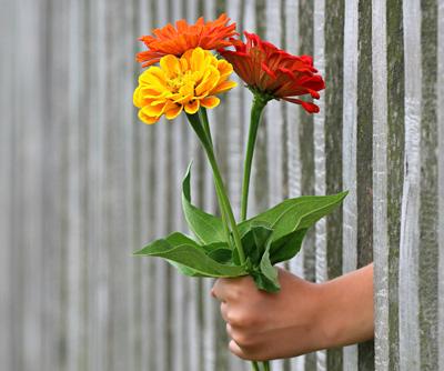 Lass es blühen - Blumen