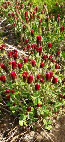 Lass es blühen - Nachsaat der Blühflächen Mai 2020