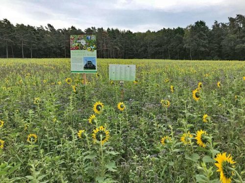 Lass es blühen - Schilder zwischen Sonnenblumen